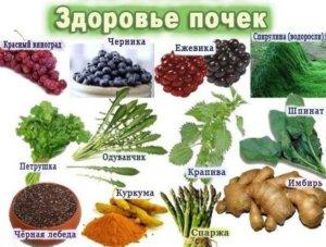 растения для здоровья почек
