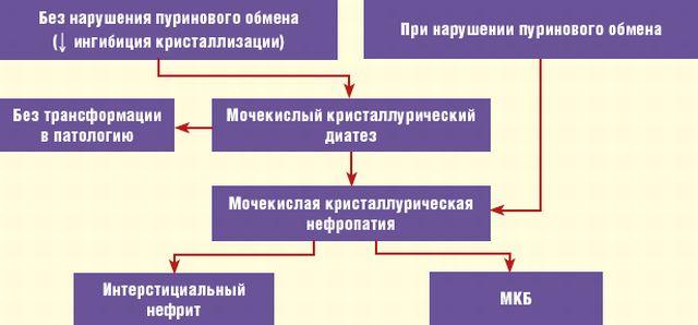 Развитие мочекислого диатеза