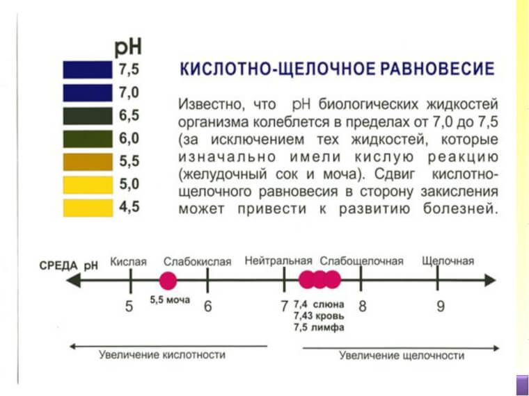 Нормы PH в организме