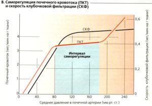 График давления в почечной артерии