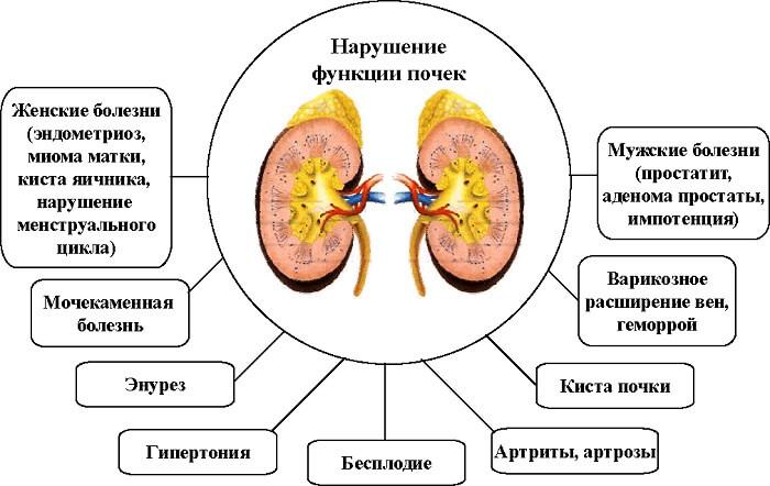 возможные проблемы органа