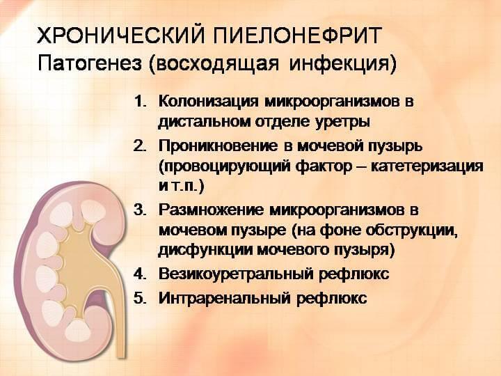 Хронический пиелонефрит симптомы диета