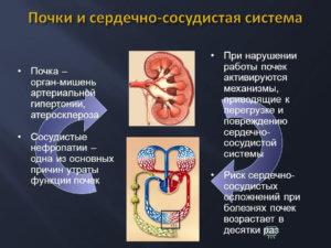 взаимосвязи в организме
