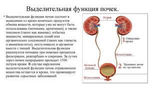 функционирование органа