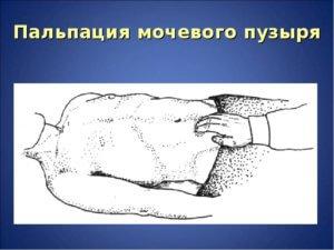 ощупывание тела пациента