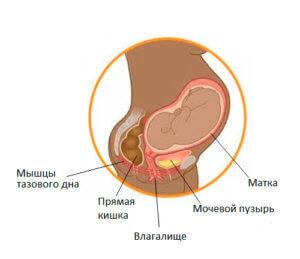 взаимодействие органов