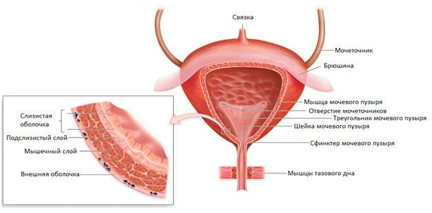 Простуда мочевого пузыря у мужчин: симптомы, лечение